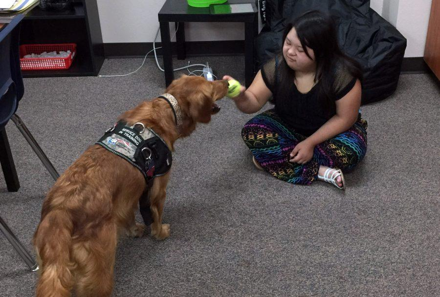 Service dog helps special-ed kids