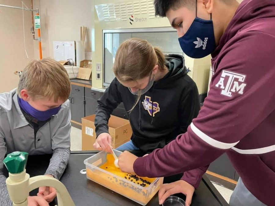 Biology students fight for survival in a game of Battle of the Beaks. Students used makeshift items as beaks to gather food.